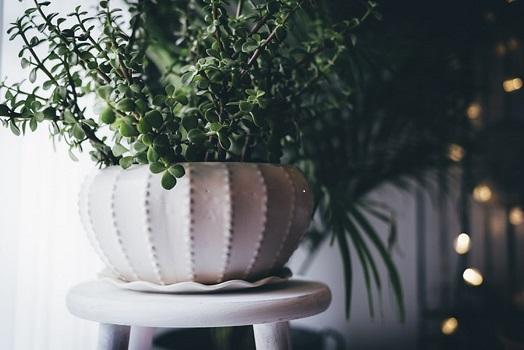 Une vase avec des fleurs décoratives